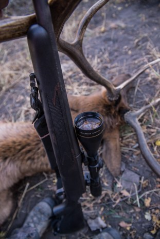 colorado, hunting, elk, rifle, trophy, gold, ammunition, shack, leupold, rack, horn