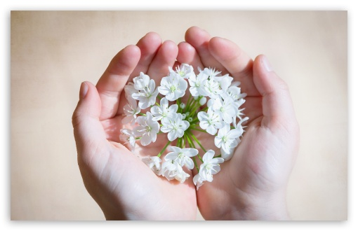 hands_holding_flowers-white