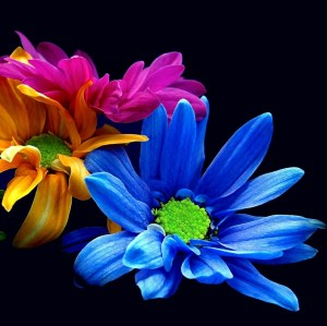 colorful-flowers-smartphoneheadder