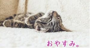 eye-catch-sleeping-kitten