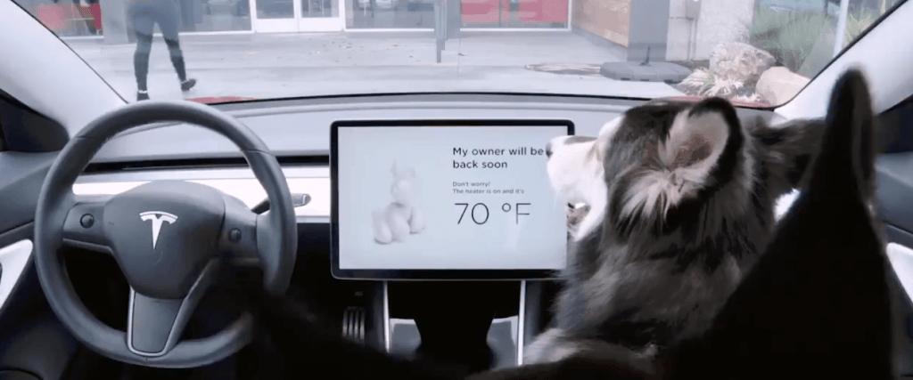 Tesla sentry dog mode