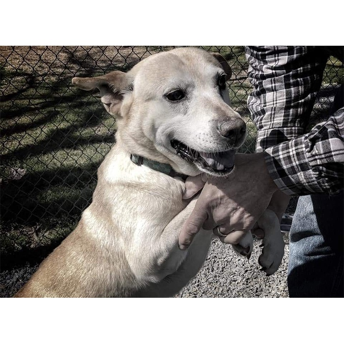 Dexter (the dog)