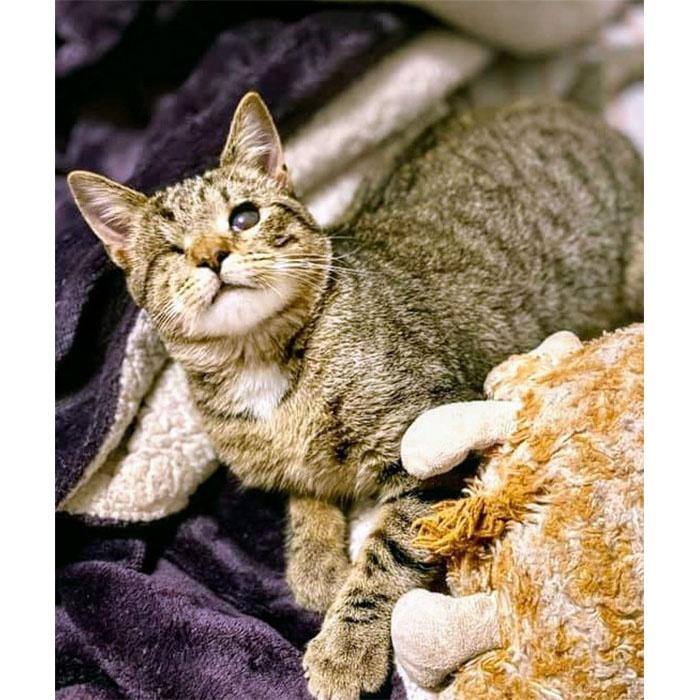 Blinky, cat, adopt