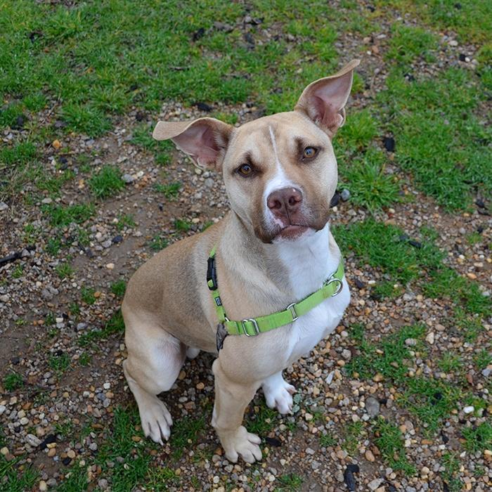 Cooper the rescue dog