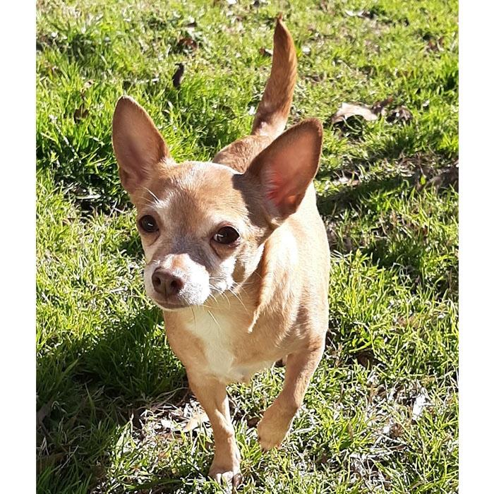 marcella, dog, adopt