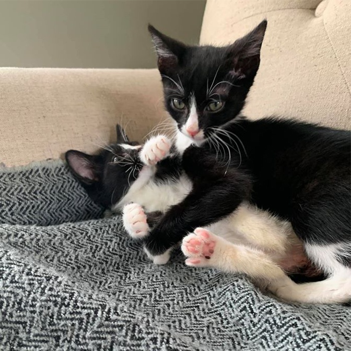 BooBoo and Babette, cat, adopt