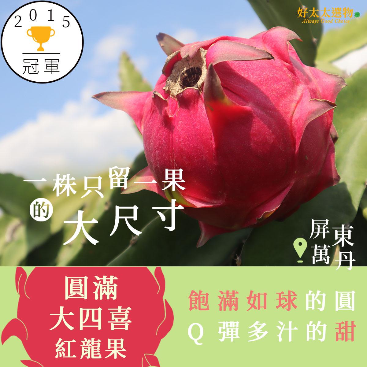 屏東萬丹全國冠軍大紅火龍果 一株留一果的大尺寸