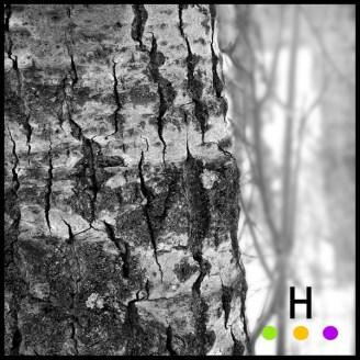 tree trunk up close