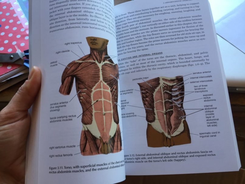 Anatomy Of Hatha Yoga H David Coulter Pdf Wajiyoga