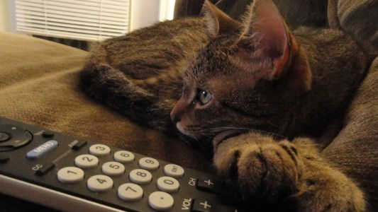 And you thought the battle for the remote was over. Image by CC W Baldwin.