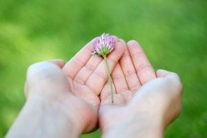 flower-8539_1280