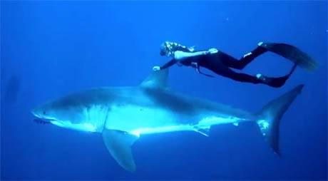 Impresionante: Mujer nada con gran tiburón blanco -Huaralenlinea