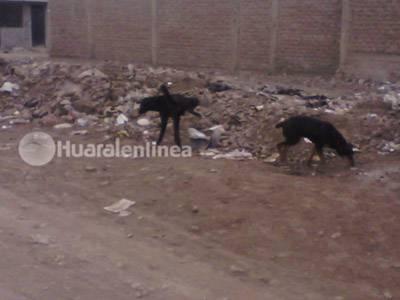 perros Huaral