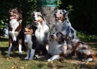 Hunde_Gruppe