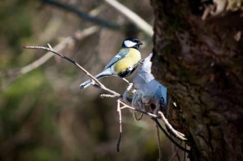 Ptak w karmniku
