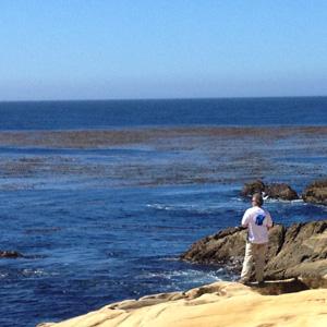 Point Lobos (2)