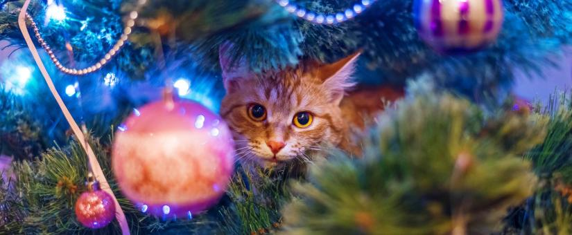 Pet-Proof Your Holiday Tree