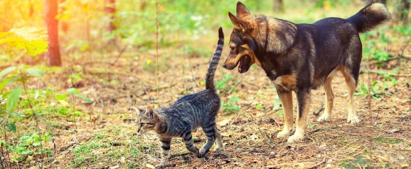 Why We Love Our Pets, and Why They Love Us