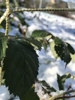 Winterimpressionen 9a (5)
