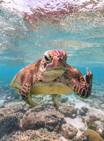 Animales más graciosos fotos premiadas (14)