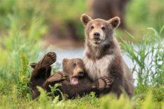 Animales más graciosos fotos premiadas (4)