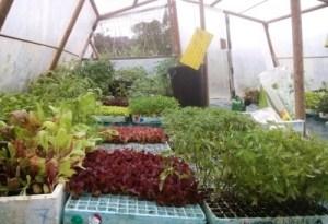 Semillero / plantas para vender en Sopelana
