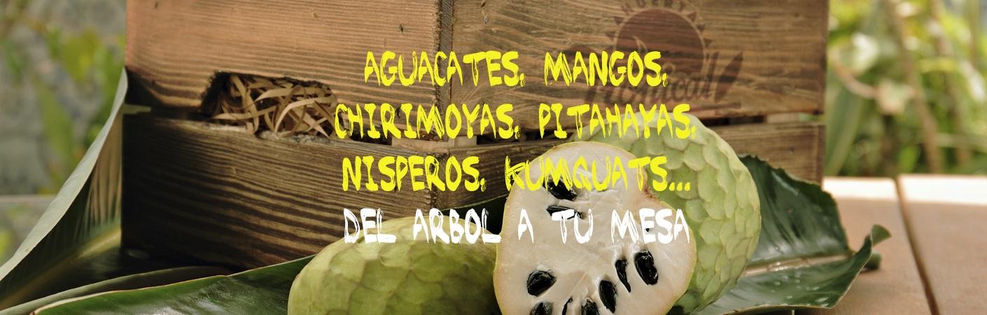 Mangos,aguacates, chirimoyas,nisperos, kumquats,pitahayas,jackfruit