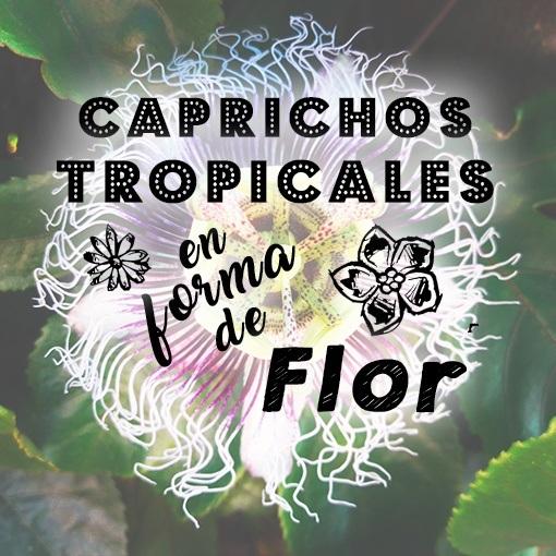caprichos tropicales en forma de flor