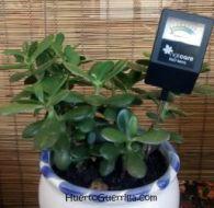 pluviometro en un árbol de jade