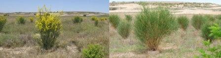 waterboxx desierto Monegros