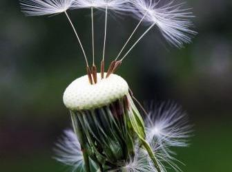 ¿Cómo recolectar semillas de nuestras hortalizas y flores?