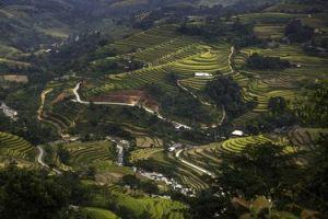 paisaje de terrazas de cultivo de arroz en Vietnam