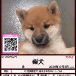 """<span class=""""title"""">202000290 柴犬</span>"""