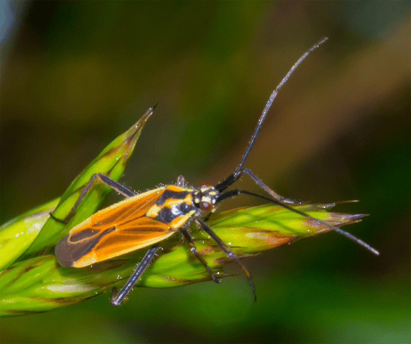 Insect 178