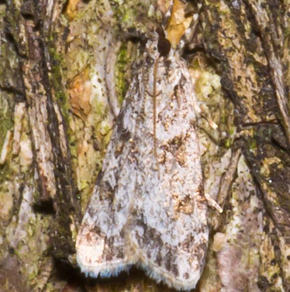 Moth 19