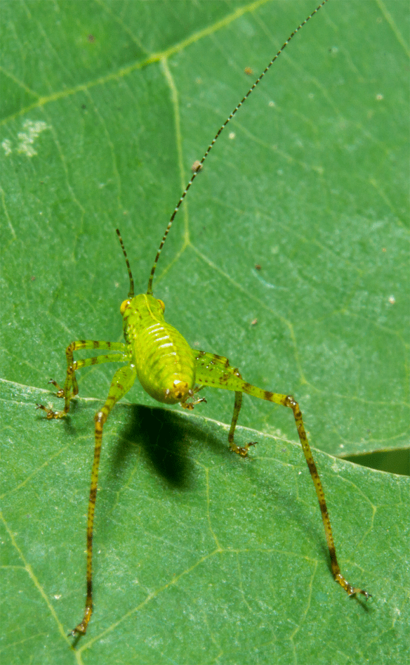 Insect 385
