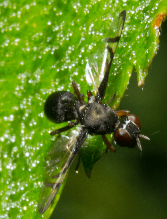 Insect 389