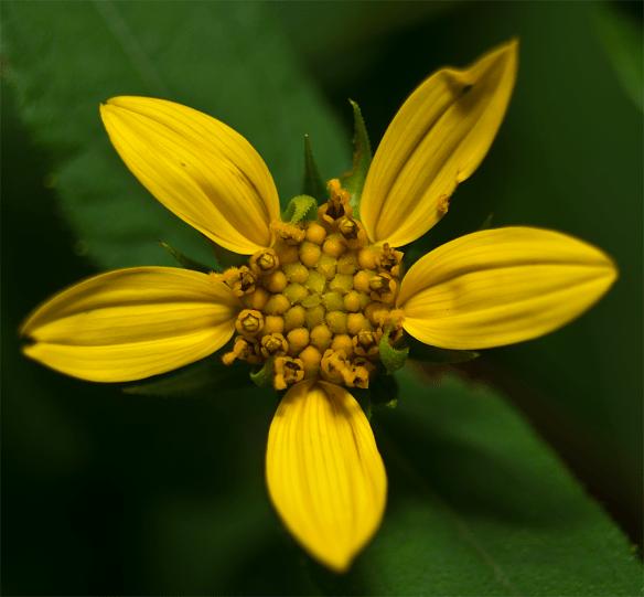 Flower 72
