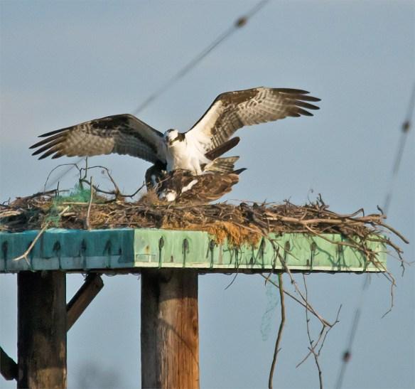 Osprey 285