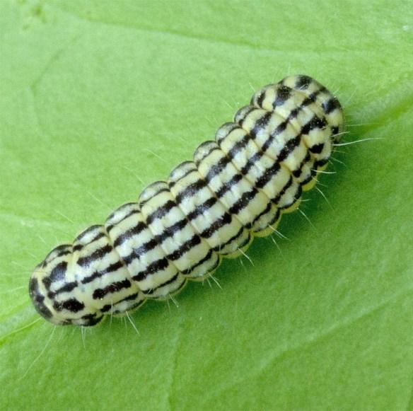Caterpillar 209