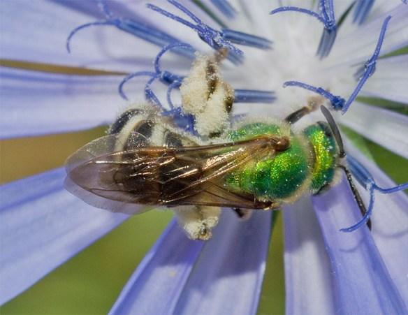 Bee 202