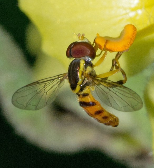 Bee 208