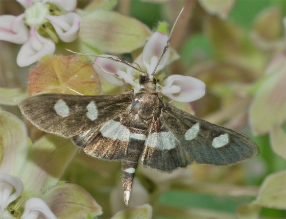 Moth 206