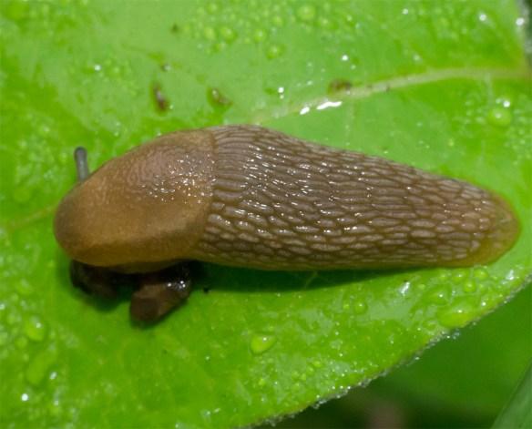 Slug 13