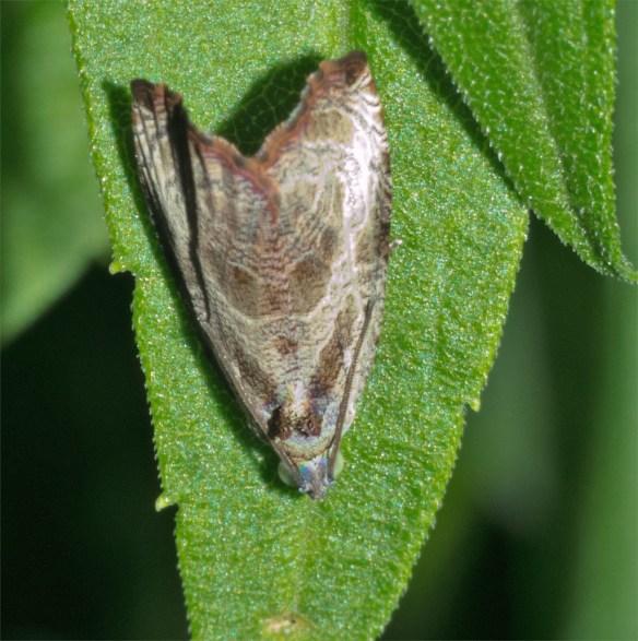 Moth 209