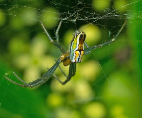 Spider 250