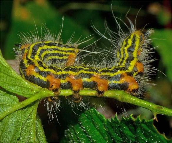 Caterpillar 218