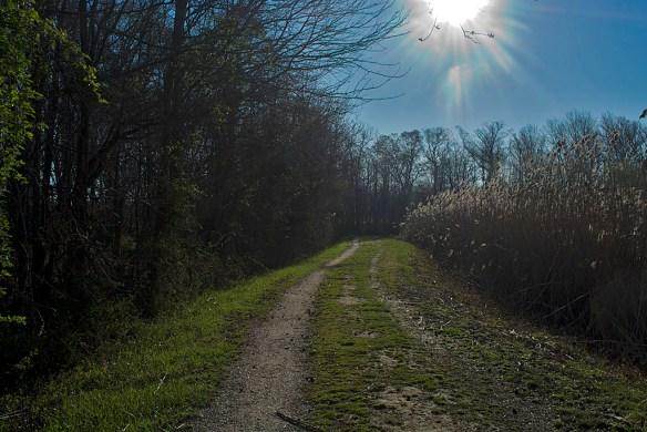 Terrapin Path 5