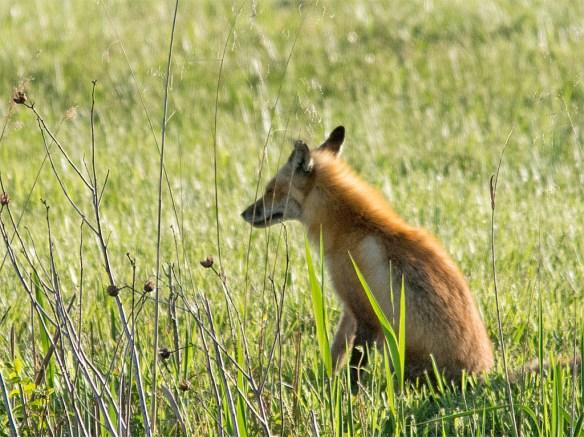 Fox 46