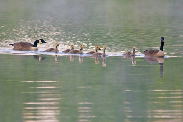 Canada Goose 2016-23
